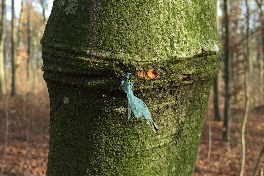 Resilienz - Baum 1